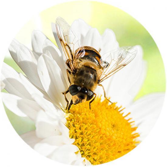 pszczoly.jpeg